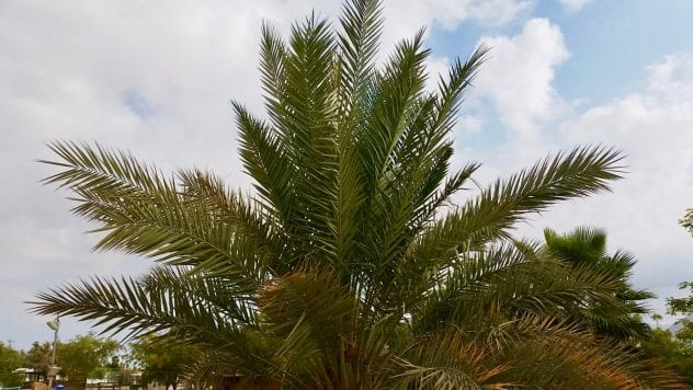 A Farming Community in Israel's Arava Desert is Bringing Trees Back to Life that Bear Fruit From The Time of the Bible